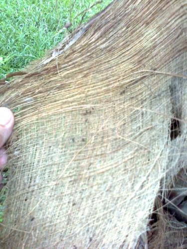 Coconut_Blanket